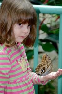 10. Owl Butterfly