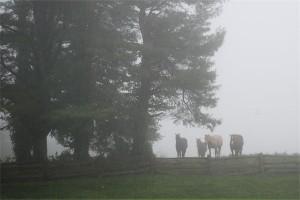 Horses in Rain & Fog